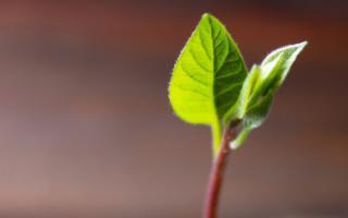 2020 Yılında Dünya Yüzde 2,4 büyüyecek, iflaslar yüzde 6 artacak