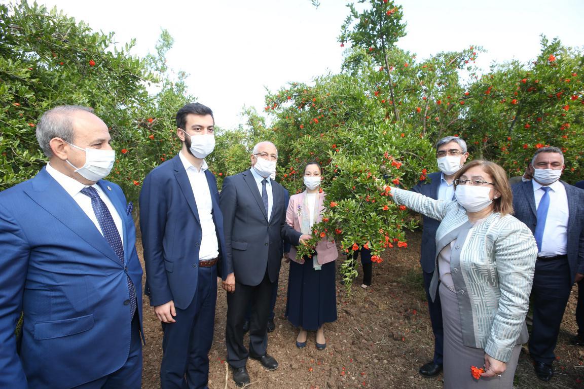 Başkan Fatma Şahin'den Oğuzeli Nar Bahçelerine ziyaret