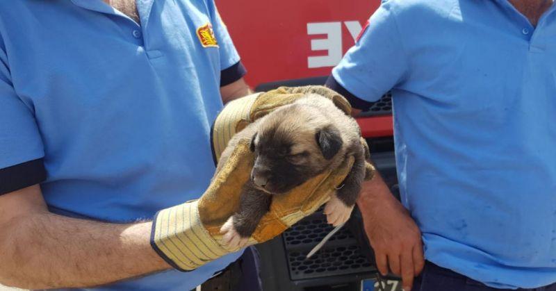 Yavru köpek için CAHİDE ve itfaiye el ele