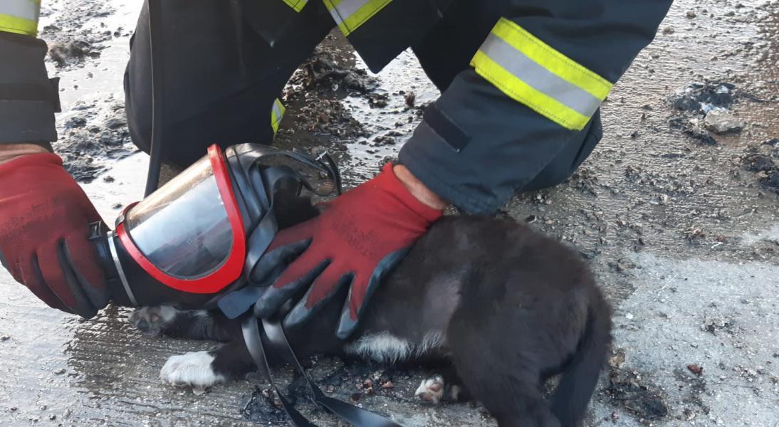 GAOSB İtfaiye Ekibi Minik Köpeği Yanmaktan Kurtardı