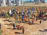 Büyükşehir, Kent Merkezini Ağaçlarla Donatıyor