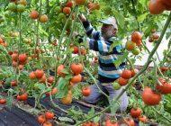 Tarla İle Market Arasındaki Fiyat Farkı Üreticiyi Çileden Çıkardı