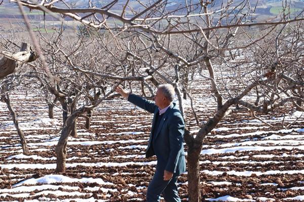 Kar Yağışı Antep Fıstığı Üreticilerini Sevindirdi