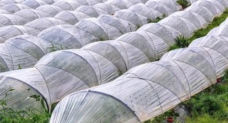 Uzmanlar, Sera Üretiminde Tarım İlacı Kullanımının Daha Sıkı Denetlenmesi Gerektiğini Vurguluyor