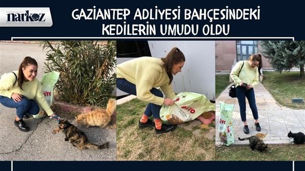 Gaziantep Adliyesi Bahçesindeki Kedilerin Umudu Oldu