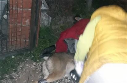Köpeğin Saldırdığı Vatandaşı Jandarma Kurtardı