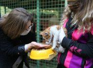 Gaziantep'te Sokak Hayvanları İçin İş Birliği
