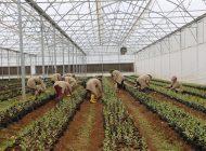 Büyükşehir Tarım Eğitimlerine Başladı