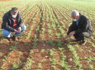 Zirai don ile şiddetli rüzgar Araban'da çiftçileri korkuttu