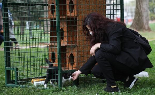 Büyükşehir, Hayri Tütüncüler Parkı'na Yeni Kedi Evleri Kurdu