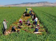 Güneydoğu'nun Tahıl Ambarında Kalkınma Kooperatifi Kuruldu