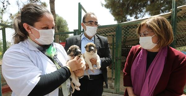 Başkan Fatma Şahin'den Hayvan Barınağına Ziyaret