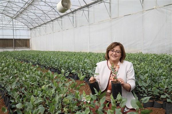Başkan Şahin Oğuzeli'nde Tarıma Verilen Desteklerini İnceledi