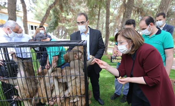"""Gaziantep Hayvanat Bahçesi Yeni Üyelerine """"Hoşgeldin"""" Dedi"""