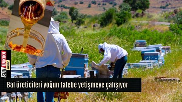 Gaziantep'te arı sağımı başladı