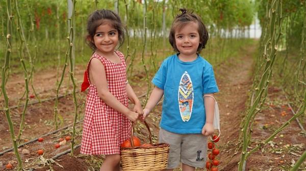 Gazi şehrin minik elleri sebze hasadı yaptı