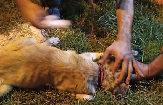Boğazı kesik halde bulunan köpeği vatandaşlar kurtardı